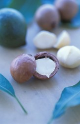3. Macadamia Nuts. Photo Credit: Peggy Greb (http://www.ars.usda.gov/is/graphics/photos, K11222-1), Agricultural Research Service (ARS, http://www.ars.usda.gov), United States Department of Agriculture (USDA, http://www.usda.gov), Government of the United States of America (USA).