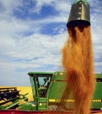 2. Wheat Harvest. Akron, State of Colorado, USA. Photo Credit: Scott Bauer (http://www.ars.usda.gov/is/graphics/photos, K4258-9), Agricultural Research Service (ARS, http://www.ars.usda.gov), United States Department of Agriculture (USDA, http://www.usda.gov), Government of the United States of America (USA).