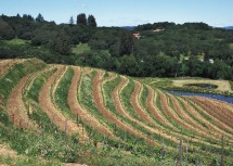 3. Hillside Vineyard Terraces in Sonoma County, State of California, USA. Photo Credit: Lynn Betts (2000, http://photogallery.nrcs.usda.gov, NRCSCA00024), USDA Natural Resources Conservation Service (NRCS, http://www.nrcs.usda.gov), United States Department of Agriculture (USDA, http://www.usda.gov), Government of the United States of America (USA).
