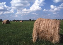 3. Large Hay Bales in a Field, Osage County, State of Missouri, USA. Photo Credit: Norm Klopfenstein (http://photogallery.nrcs.usda.gov, NRCSMO02033), USDA Natural Resources Conservation Service (NRCS, http://www.nrcs.usda.gov), United States Department of Agriculture (USDA, http://www.usda.gov), Government of the United States of America (USA).