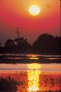 2. A Heron and the Setting Sun. Photo Credit: Art Weber (WO-3944-CD-43A), Washington DC Library, United States Fish and Wildlife Service Digital Library System (http://images.fws.gov), United States Fish and Wildlife Service (FWS, http://www.fws.gov), United States Department of the Interior (http://www.doi.gov), Government of the United States of America (USA).
