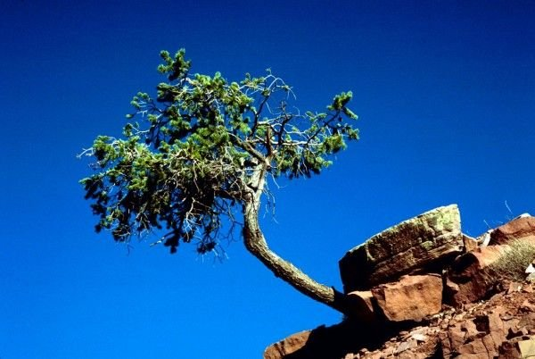 A Tree Growing From and Held by the Rock, Grand Canyon National Park, State of Arizona, USA. Photo Credit: Gary M. Stolz (WO8076-010), Washington DC Library, United States Fish and Wildlife Service Digital Library System (http://images.fws.gov), United States Fish and Wildlife Service (FWS, http://www.fws.gov), United States Department of the Interior (http://www.doi.gov), Government of the United States of America (USA).