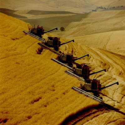 Harvesting Wheat. PNNL Photo Library (http://PictureThis.pnl.gov, SMAA-46PMG7, August 1978), Agricultural Research Category, Pacific Northwest National Laboratory (PNNL, http://www.pnl.gov), United States Department of Energy (http://www.doe.gov), Government of the United States of America.