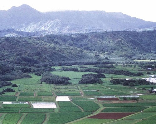 A Beautiful View of Taro Fields in the Valley with Hills and a Mountain Range in the Background. State of Hawaii, USA. Photo Credit: NRCSHI97033, http://photogallery.nrcs.usda.gov, USDA Natural Resources Conservation Service (NRCS, http://www.nrcs.usda.gov), United States Department of Agriculture (USDA, http://www.usda.gov), Government of the United States of America (USA).