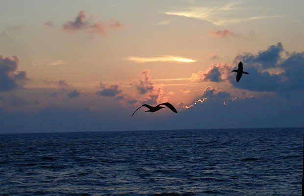 Sunset and Flying Birds over the Ocean at Clipperton Island (also known as Ile de la Passion), Possession of Republique Francaise - French Republic, Fall of 2000. Photo Credit: Juan Carlos Salinas, NMFS, SWFSC, National Oceanic and Atmospheric Administration Photo Library (http://www.photolib.noaa.gov), Small World Collection, National Oceanic and Atmospheric Administration (NOAA, http://www.noaa.gov), United States Department of Commerce (http://www.commerce.gov), Government of the United States of America (USA).
