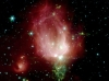 NGC 7129, Rosebud-shaped and Rose-colored, in the Constellation Cepheus. Photo Credit: Spitzer Telescope Sends Rose for Valentine's Day, NASA Spitzer Space Telescope (SST), Planetary Photojournal (http://photojournal.jpl.nasa.gov, PIA05266), National Aeronautics and Space Administration (NASA, http://www.nasa.gov) / Jet Propulsion Laboratory (JPL, http://www.jpl.nasa.gov) / California Institute of Technology (Caltech, http://www.spitzer.caltech.edu) / Harvard-Smithsonian CfA, Government of the United States of America (USA).