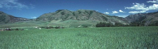 2. A Small Grain (Wheat) Crop Ripens in the Summer Sun in Cache County, State of Utah, USA. Photo Credit: Ron Nichols (1997, http://photogallery.nrcs.usda.gov, NRCSUT03010), USDA Natural Resources Conservation Service (NRCS, http://www.nrcs.usda.gov), United States Department of Agriculture (USDA, http://www.usda.gov), Government of the United States of America (USA).