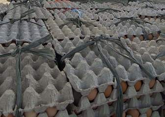 1. Fresh Eggs Unloaded From Singapore's C-130 Aircraft; the Cargo Also Included Rice and Clothing, January 5, 2005. Aceh, Sumatra, Republik Indonesia. Photo Credit: Photographer's Mate 3rd Class Gabriel Piper, Navy NewsStand - Eye on the Fleet Photo Gallery (http://www.news.navy.mil/view_photos.asp, 050105-N-6020P-013), United States Navy (USN, http://www.navy.mil), United States Department of Defense (DoD, http://www.DefenseLink.mil or http://www.dod.gov), Government of the United States of America (USA).