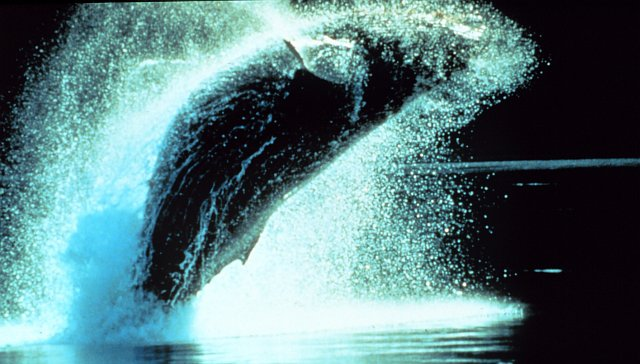 1. Humpback Whale, Megaptera novaeangliae, Breaching. Photo Credit: NOAA Central Library, National Oceanic and Atmospheric Administration Photo Library (http://www.photolib.noaa.gov, anim0837), NOAA's Ark (Animals) Collection, National Oceanic and Atmospheric Administration (NOAA, http://www.noaa.gov), United States Department of Commerce (http://www.commerce.gov), Government of the United States of America (USA).