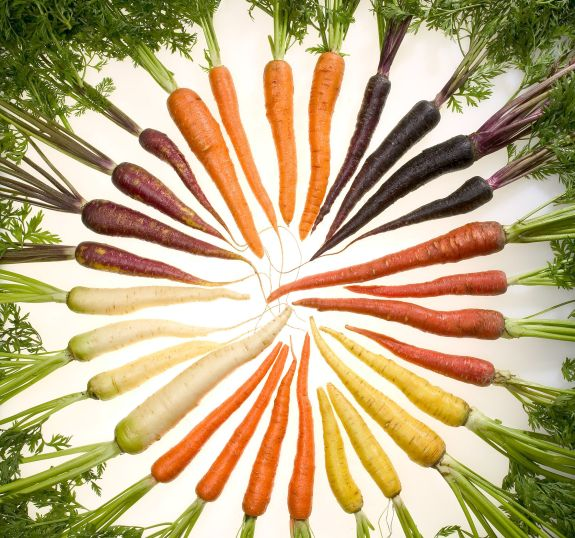 Carrots in Seven Different Colors. Photo Credit: Stephen Ausmus (http://www.ars.usda.gov/is/graphics/photos, K11611-1), Agricultural Research Service (ARS, http://www.ars.usda.gov), United States Department of Agriculture (USDA, http://www.usda.gov), Government of the United States of America (USA).