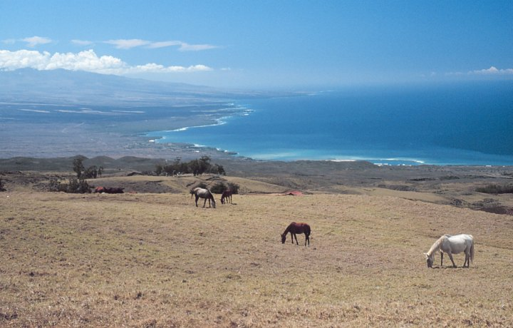The Eye is Charmed by This Gorgeous and Magnificent View of Grazing Horses on the Parker Ranch, Tall Mountains, Large White Clouds in the Blue Sky, a Long Coastline, and the Deep Blue Pacific Ocean. Hawaii, State of Hawaii, USA. Photo Credit: Commander John Bortniak, NOAA Corps (ret.); National Oceanic and Atmospheric Administration Photo Library (http://www.photolib.noaa.gov, line0385), America's Coastlines Collection, NOAA Central Library, National Oceanic and Atmospheric Administration (NOAA, http://www.noaa.gov), United States Department of Commerce (http://www.commerce.gov), Government of the United States of America (USA).
