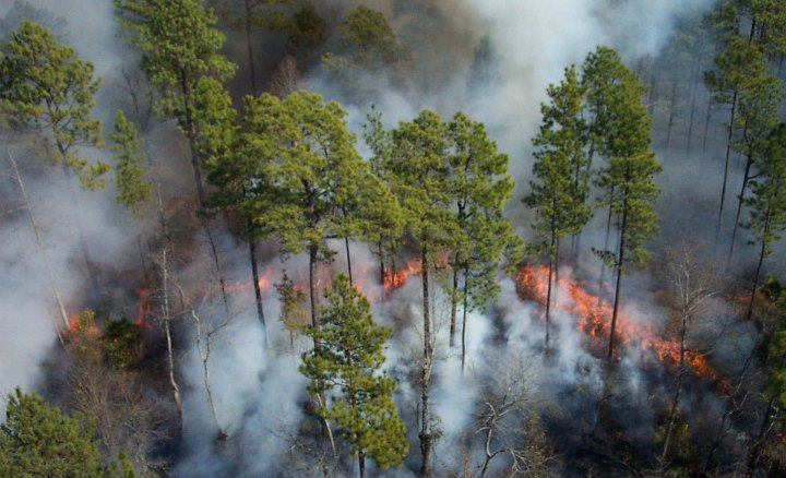 Fire Moves Through the Understory During a Controlled Burn in 2003, Okefenokee National Wildlife Refuge, State of Georgia, USA. Photo Credit: U.S. FWS (USFWS), Washington DC Library, United States Fish and Wildlife Service Digital Library System (http://images.fws.gov), United States Fish and Wildlife Service (FWS, http://www.fws.gov), United States Department of the Interior (http://www.doi.gov), Government of the United States of America (USA).