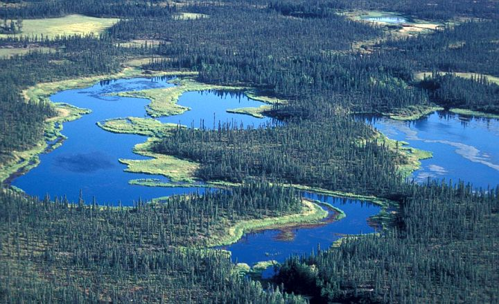 Scenic View From the Air of the Beautiful Wetlands and Spruce Forest South of Zane Hills Koyukuk Located in the National Wildlife Refuge, State of Alaska, USA. Photo Credit: U.S. FWS, Alaska Image Library, United States Fish and Wildlife Service Digital Library System (http://images.fws.gov, AK/RO/02640), United States Fish and Wildlife Service (FWS, http://www.fws.gov), United States Department of the Interior (http://www.doi.gov), Government of the United States of America (USA).