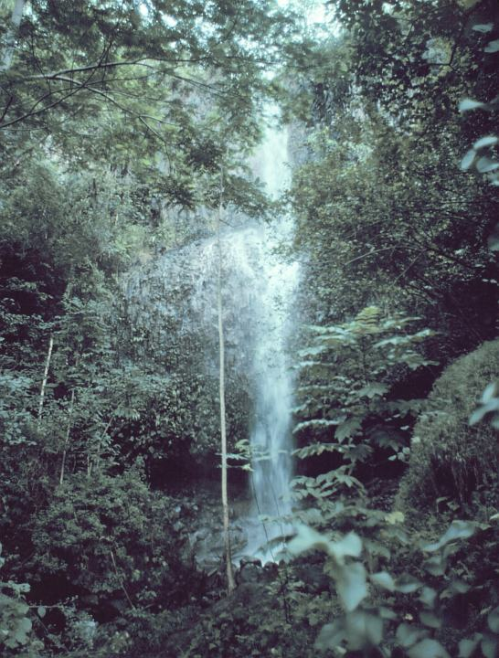 A Waterfall, as Seen Through the Rain Forest in Kauai, State of Hawaii, USA. Photo Credit: Commander John Bortniak, NOAA Corps (retired); National Oceanic and Atmospheric Administration Photo Library (http://www.photolib.noaa.gov, line0432), America's Coastlines Collection, NOAA Central Library, National Oceanic and Atmospheric Administration (NOAA, http://www.noaa.gov), United States Department of Commerce (http://www.commerce.gov), Government of the United States of America (USA).