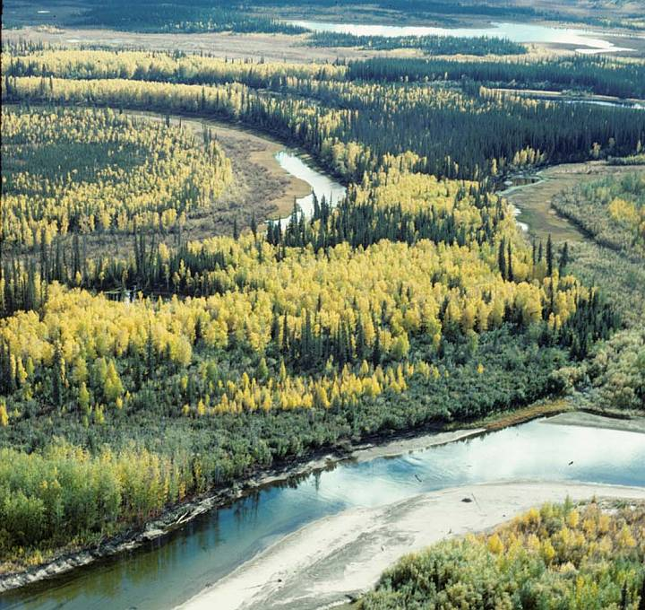 Beautiful Fall Season Landscape on the Yukon Flats National Wildlife Refuge, State of Alaska, USA. Photo Credit: Ted Heuer, Alaska Image Library, United States Fish and Wildlife Service Digital Library System (http://images.fws.gov, HabAVRv070), United States Fish and Wildlife Service (FWS, http://www.fws.gov), United States Department of the Interior (http://www.doi.gov), Government of the United States of America (USA).