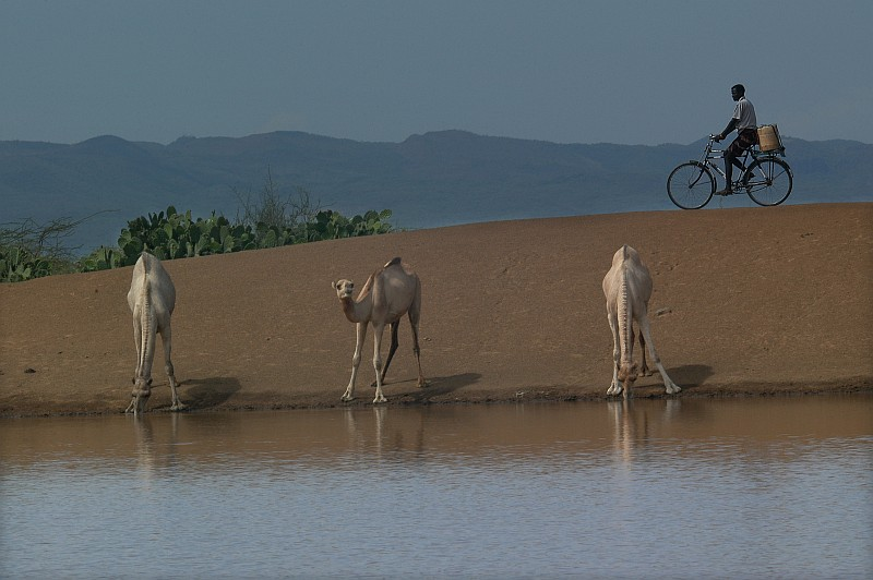 Camels Drinking Water at the Chemeril Dam, August 15, 2006, Chemeril, Republic of Kenya - Jamhuri y Kenya. Photo Credit: Mass Communication Specialist 2nd Class Roger S. Duncan, Navy NewsStand - Eye on the Fleet Photo Gallery (http://www.news.navy.mil/view_photos.asp, 060815-N-0411D-030), United States Navy (USN, http://www.navy.mil), United States Department of Defense (DoD, http://www.DefenseLink.mil or http://www.dod.gov), Government of the United States of America (USA).