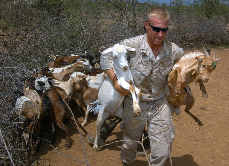 2. Herd (Flock) of Goats Corraled on the Ground and Two Goats Being Carried Away for Their Immunizations: One Goat Under the Right Arm and a Second Goat Tucked Under the Left  Arm, August 15, 2006, Chemeril, Republic of Kenya. Photo Credit: Mass Communication Specialist 2nd Class Roger S. Duncan, Navy NewsStand - Eye on the Fleet Photo Gallery (http://www.news.navy.mil/view_photos.asp, 060815-N-0411D-044), United States Navy (USN, http://www.navy.mil), United States Department of Defense (DoD, http://www.DefenseLink.mil or http://www.dod.gov), Government of the United States of America (USA).