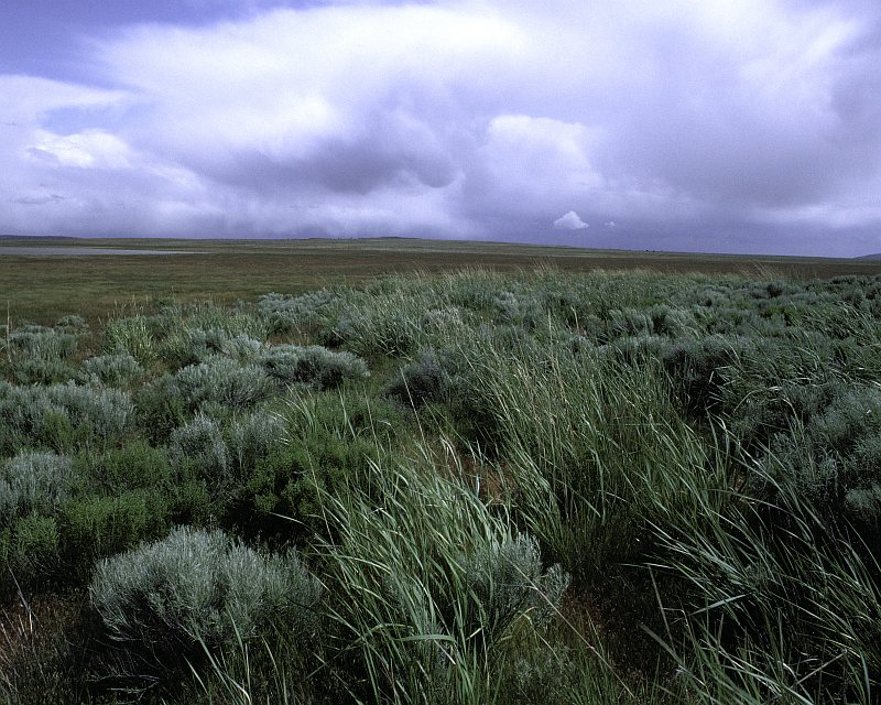 Cloudy Sky and an Open Field of Wild Rye and Sage at Clear Lake National Wildlife Refuge, Tulelake, State of California, USA. Photo Credit: Tupper Ansel Blake, NCTC Image Library, United States Fish and Wildlife Service Digital Library System (http://images.fws.gov, WV-9175-Centennial CD), United States Fish and Wildlife Service (FWS, http://www.fws.gov), United States Department of the Interior (http://www.doi.gov), Government of the United States of America (USA).