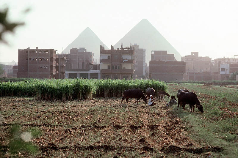 2. Backdropped By The Great Pyramids, Farmers and Caribou in the Field Near Cairo, Jumhuriyat Misr al-Arabiyah - Arab Republic of Egypt. Photo Credit: Defense Visual Information Center (DVIC, http://www.DoDMedia.osd.mil, DF-ST-99-05287), United States Department of Defense (DoD, http://www.DefenseLink.mil or http://www.dod.gov), Government of the United States of America (USA).